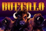 Buffalo slots free online