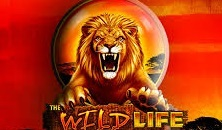 The Wild Life slots free online